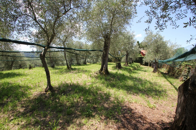 Rustico near Camaiore for Sale